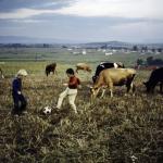 Serbia, 1989. Foto di Steve McCurry
